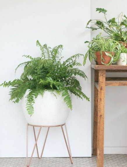 wohnideen mit pflanzen pflanzen standard wohnideen einrichten