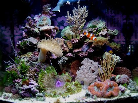 Soft Aquarium aquascaping a soft coral nano reef search