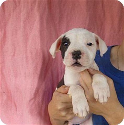 how many puppies can a bulldog bulldog puppy and tips 187 adoptapet