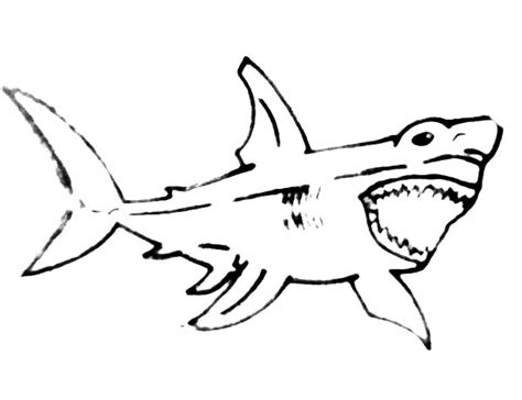 bull shark coloring pages free printable bull shark bull