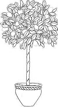 lemon tree coloring page magnolia coloring pages