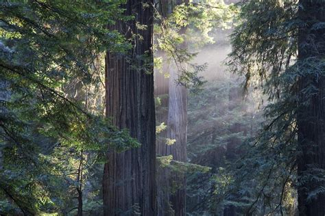 the wood for the trees one s view of nature books muir woods sausalito tour
