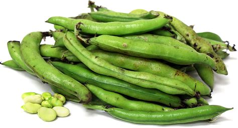 fava beans information recipes and facts