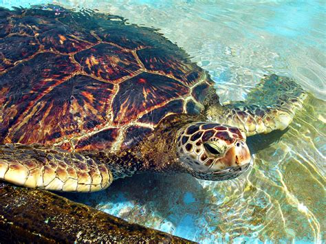 file green sea turtle color correction jpg