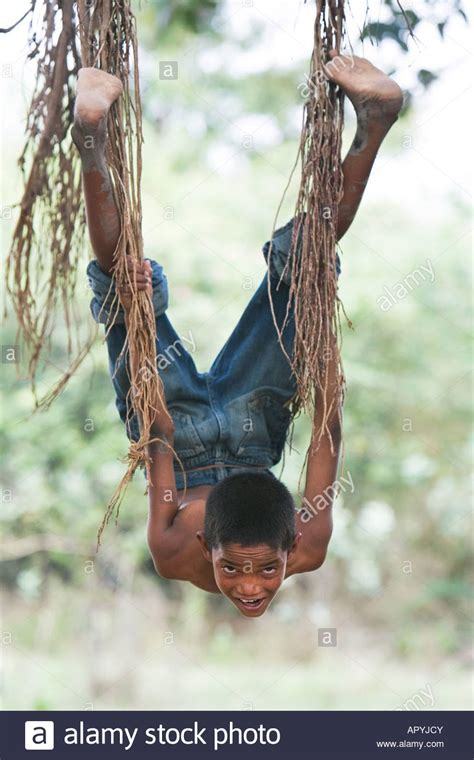 swinging from a tree indian boy swinging from the aerial roots of a banyan tree