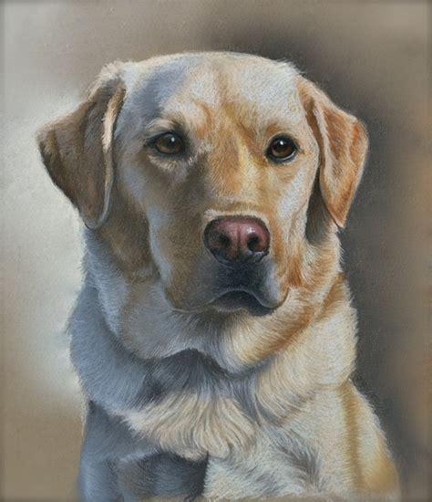 puppy portraits pet portraits imagine