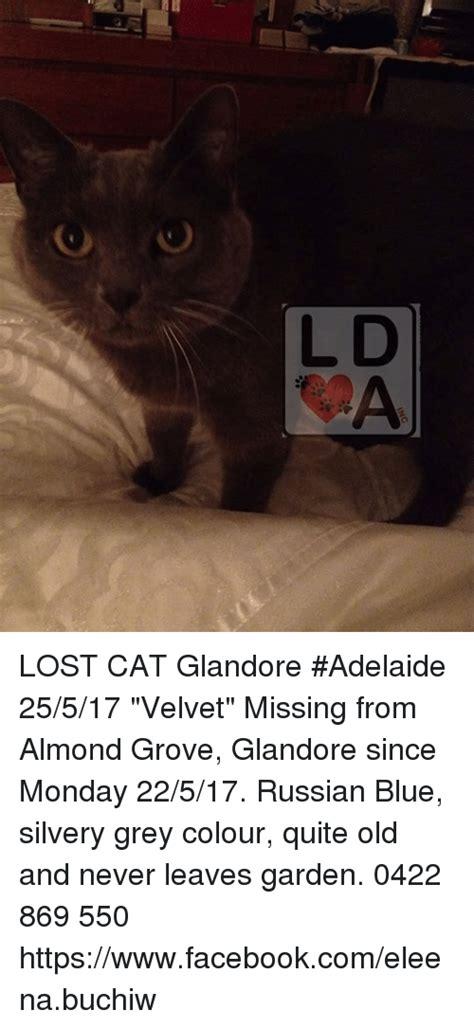 Lost Cat Meme - da lost cat glandore adelaide 25517 velvet missing from