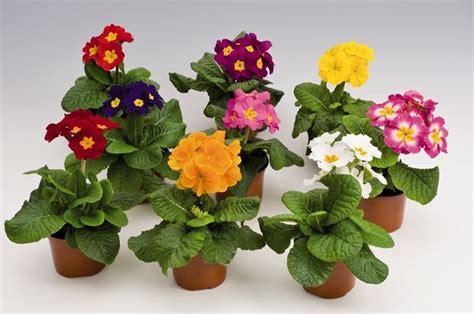 fiori in vaso da esterno piante in vaso da esterno piante da giardino piante da