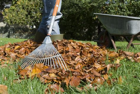 fall lawn care how to take care of grass in fall