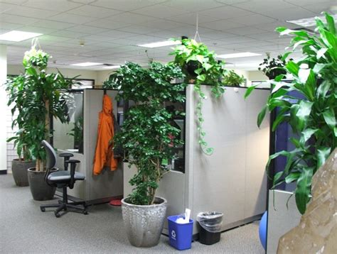 maintenance plants   office