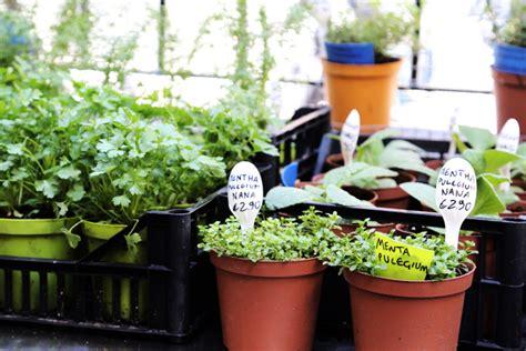 erbe in cucina orto erbe e cucina il ristorante fra le erbe aromatiche