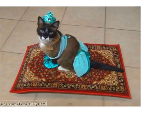 Stop Cat From On Rug by Cat Carpet 28 Images How To Stop Your Cat From Clawing