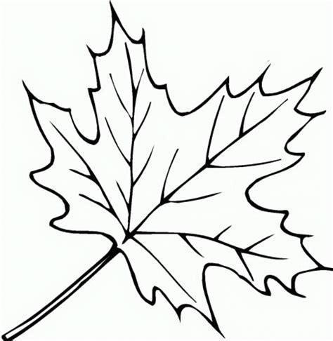 coloring page of a leaf fall leaves coloring pages clipart panda free clipart