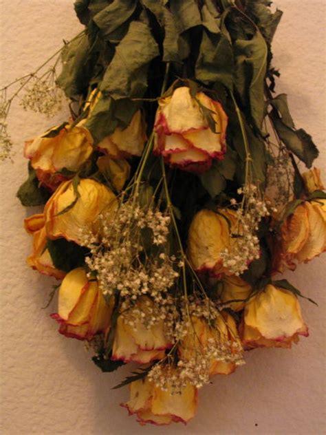 imagenes de flores secas dried roses the easy way
