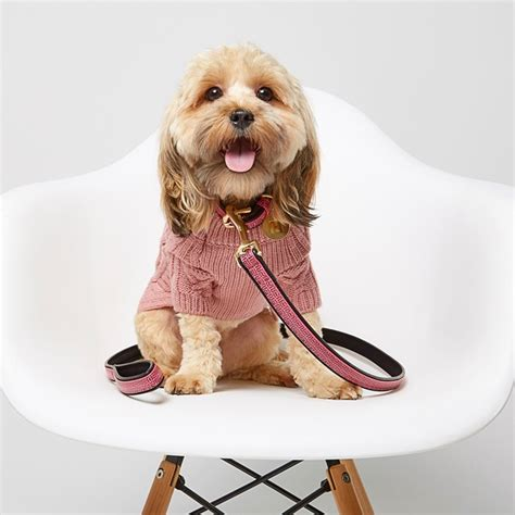 puppies ri river island launches a fashion range for dogs uk