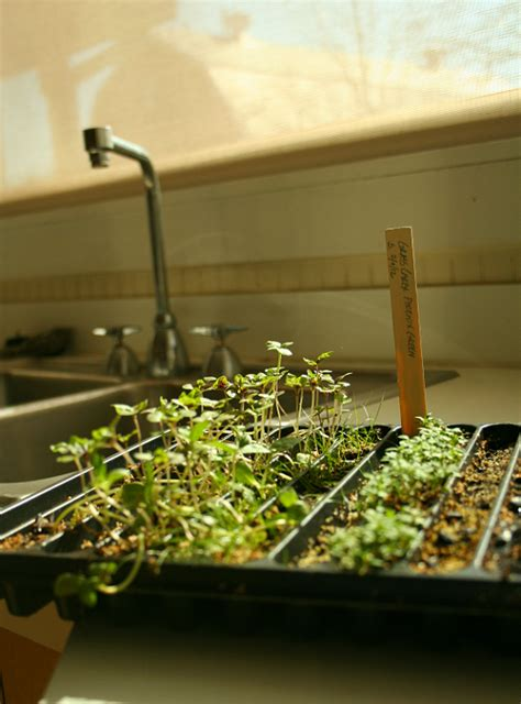 how to start an indoor vegetable garden indoor vegetable gardening growing vegetables indoors