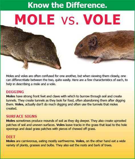 mole control in delaware maryland activ pest solutions