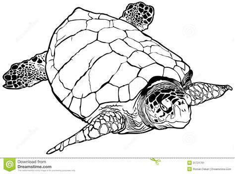 coloring page loggerhead turtle loggerhead turtle clipart clipground
