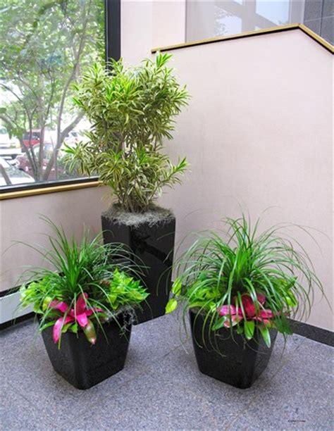 house plant ideas bunga hiasan sudut ruang tamu rancangan desain rumah
