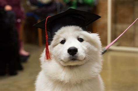 puppies   earned  diploma