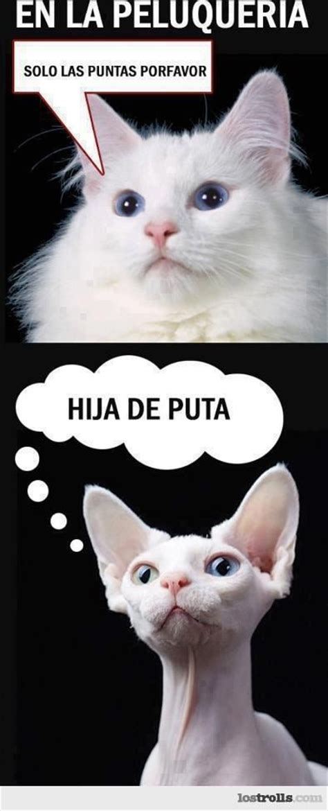 imagenes graciosas de gatos memes de gatos mainstream cats pinterest gatos and meme