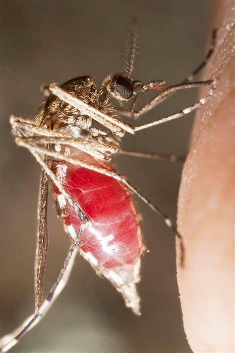 malaria  vector borne diseases lstm