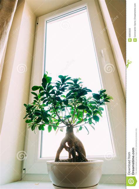 Indoor Plants Sunny Window Small Houseplant In Window Stock Photo Image 63803563