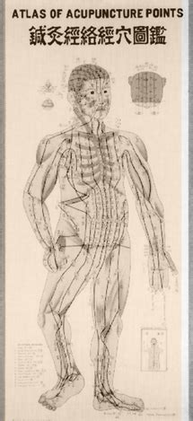 atlas of acupuncture points chiro featuring practical guide to tcvm 3 equine practice
