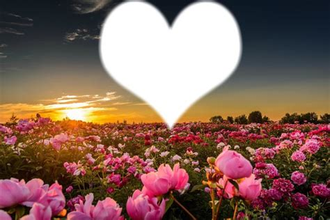 imagenes de rosas para jardin montaje fotografico jardin de rosas pixiz