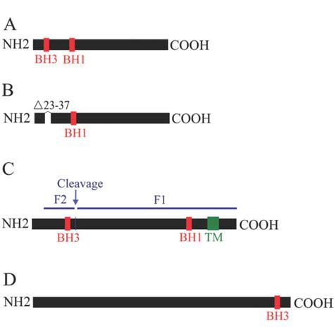 f protein ndv the matrix m protein of newcastle disease virus binds to
