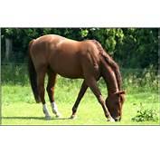 Pferde 36 Bilder Zum Ausdrucken Kostenlos Car Pictures