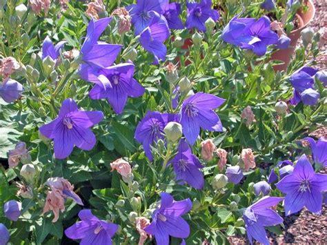 ideas   cost gardening hgtv