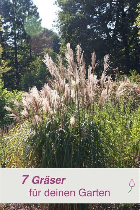 schilf pflanzen als sichtschutz 2158 die besten 10 sichtschutz pflanzen ideen auf