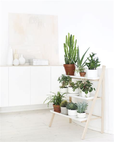 t d c interior styling indoor plants