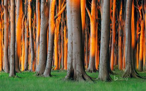 nienhagen wood alemanha nienhagen mecklenburg vorpommern germany forest tree grass