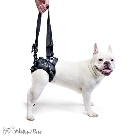rear lift harness handicapped pets walkin lift rear support harness for dogs