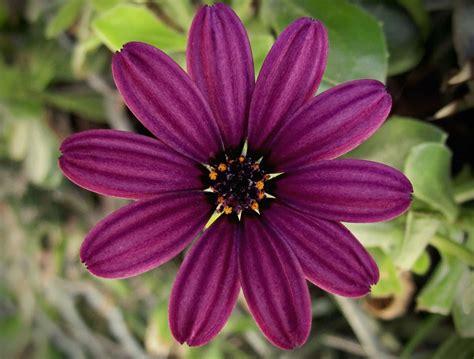 Garten Pflanzen Sommer by Kostenlose Bild Blume Flora Natur Stempel Garten