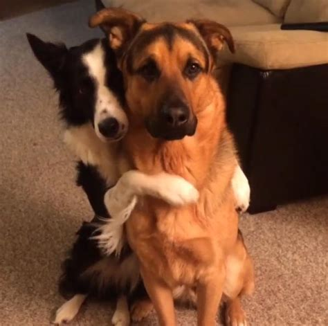 puppy best friends friends fur of hugging best friend goes viral