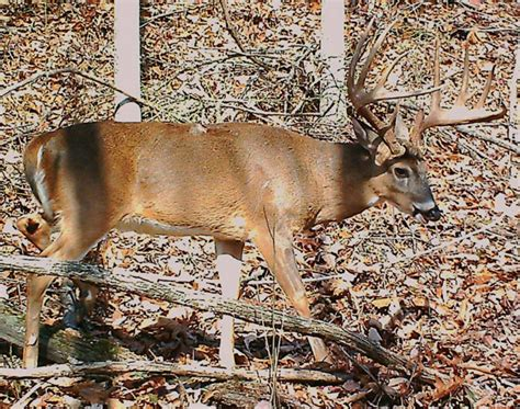 Virginia Records Wv State Record Whitetail Pictures To Pin On Pinsdaddy