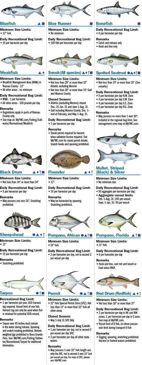 florida saltwater boating regulations 1000 ideas about surf fishing on pinterest fishing tips