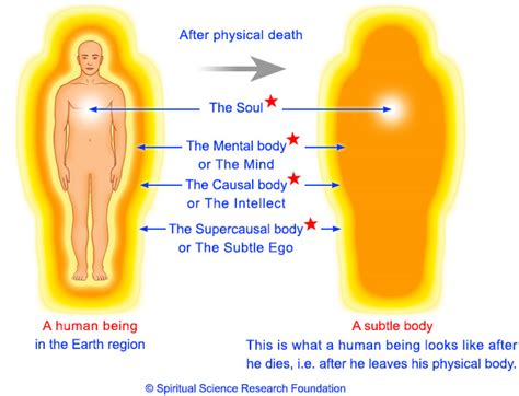body biography definition life after death revealed what really happens in the