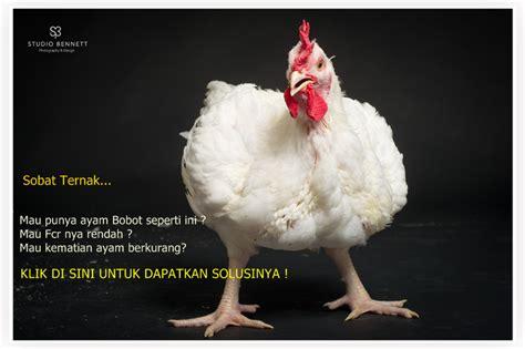 Keranjang Plastik Ayam Broiler jual pakan ayam broiler dan pakan ayam petelur langsung pabrik harga terjangkau jual peralatan