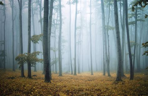 wallpaper for walls forest misty morning forest wallpaper wall mural