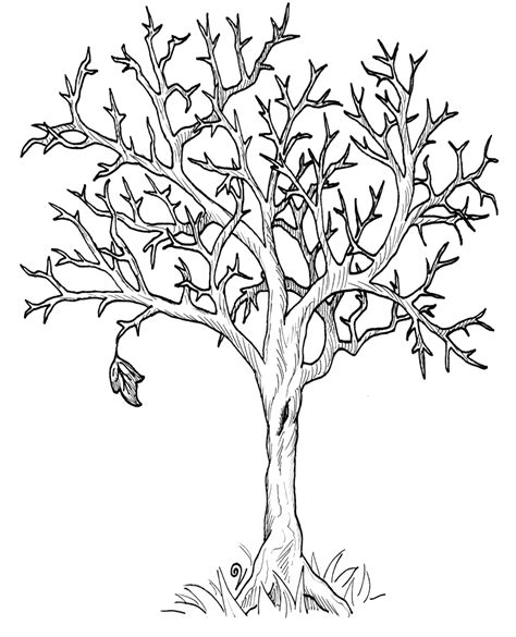 tree pattern without leaves coloring page tree autumn fall tree without leaves coloring page dover