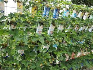 Kleine G Rten Bilder 4063 by Pflanzen In Pet Flaschen 6 X Wasser Spender Pflanzen Bew