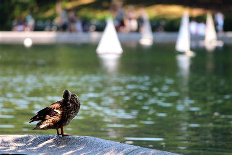 central park duck boats the viruses lurk below geospace agu blogosphere