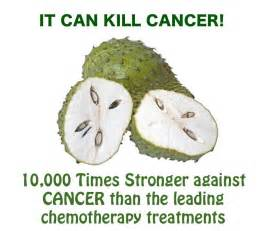 Guanabana fruit for cancer the soursop fruit as a cure for cancer