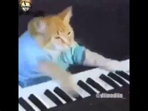 cat playing piano and raps youtube