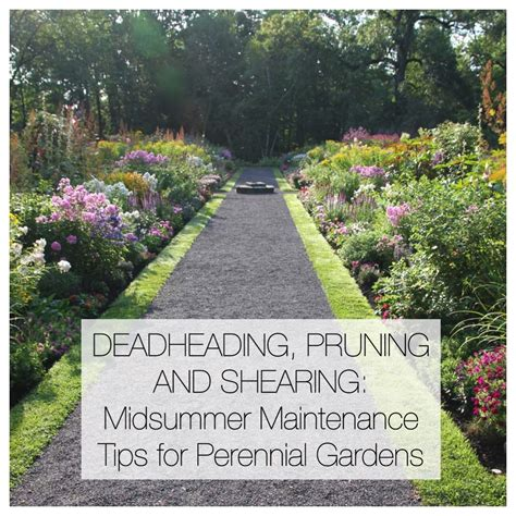 Longfield Gardens by Midsummer Maintenance Tips For Perennial Gardens