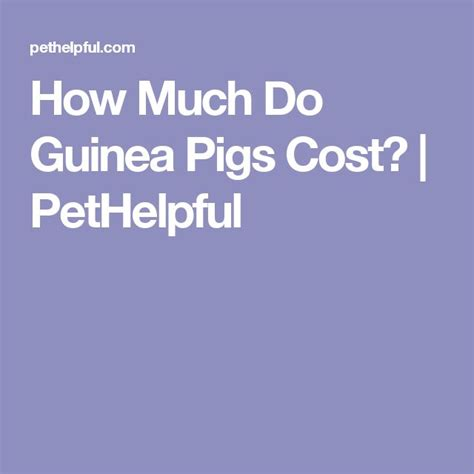 25 best ideas about guinea pig cost on pinterest cages for rabbits hamster cost and rabbit cages